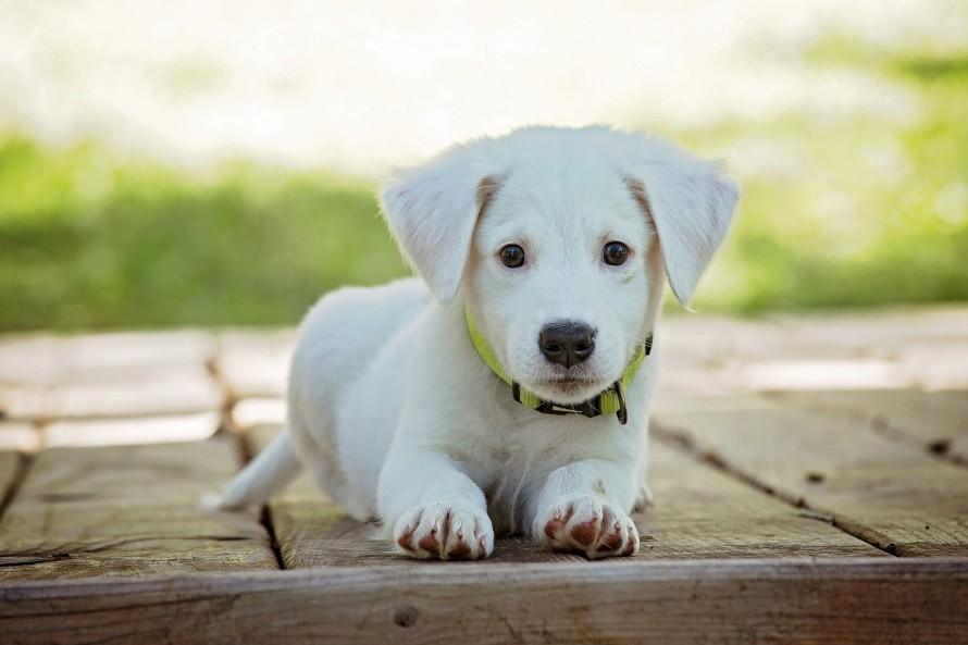puppy 1903313 1920