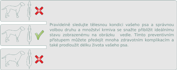kondice-psa-cz